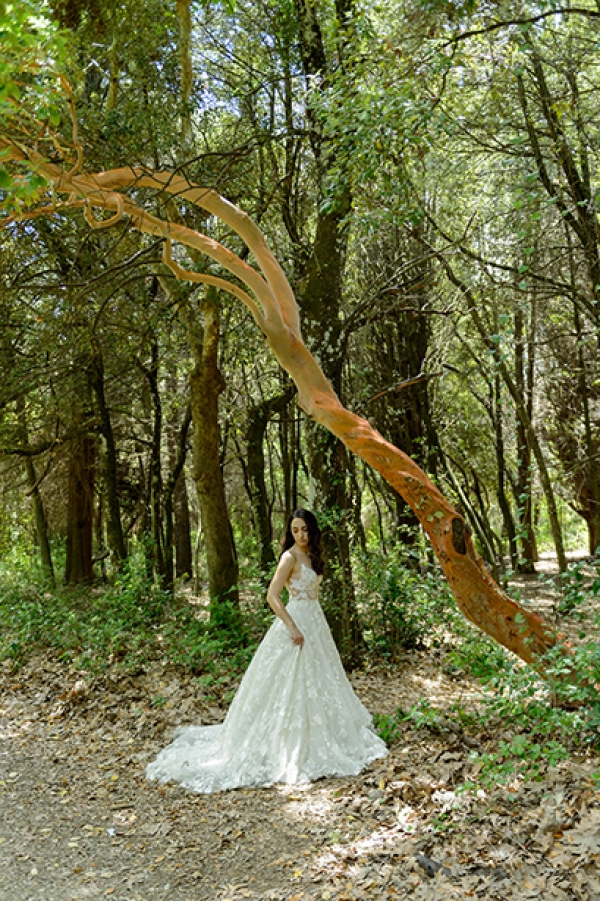 Forest After Wedding Photography
